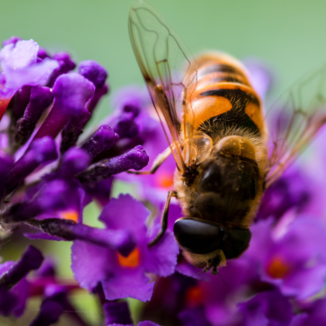 """""""Bees"""" stock image"""