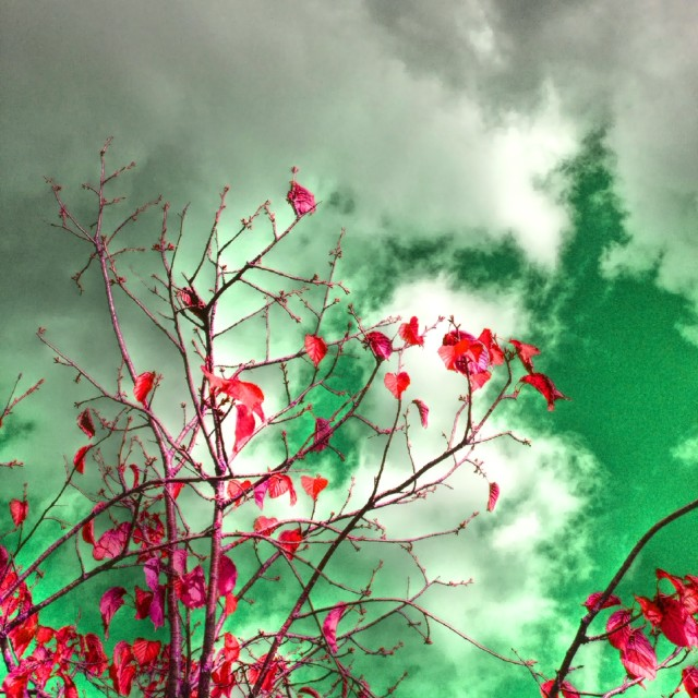 """""""Tree branches against cloudy sky"""" stock image"""