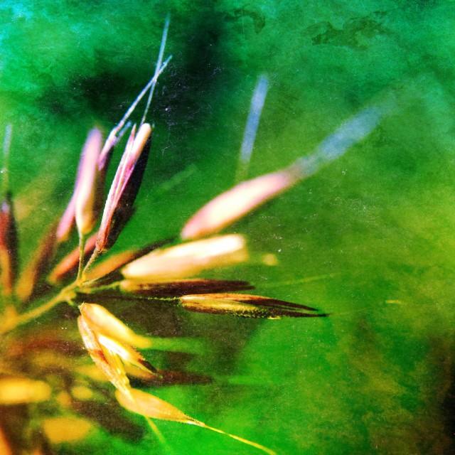 """Close up of grass"" stock image"