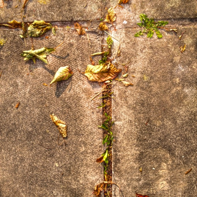 """""""Leaves on a pavement"""" stock image"""