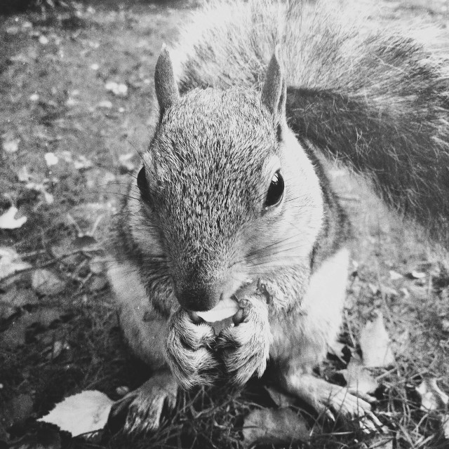 """""""Squirrel in woodland"""" stock image"""