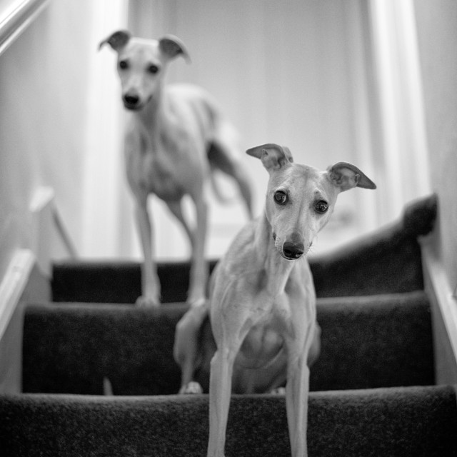 """Guardians of the Stairway"" stock image"