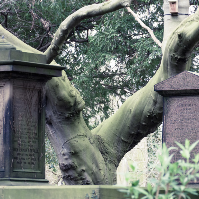 """Tree between the Graves"" stock image"