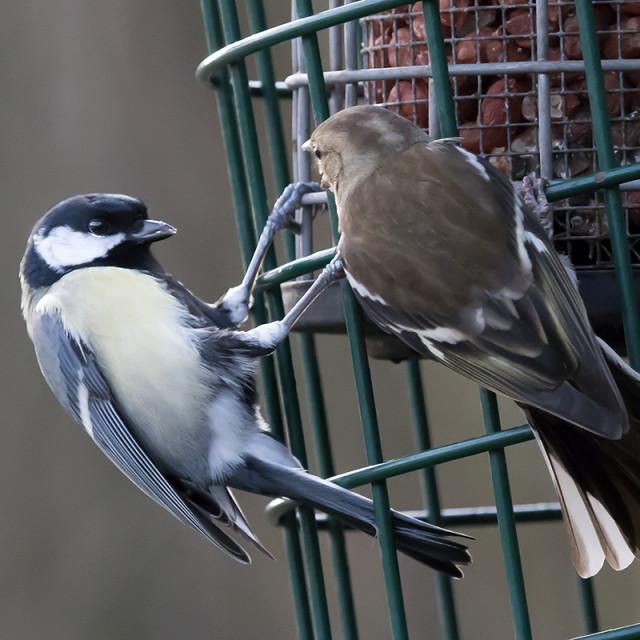 """Bird Feeder Stand off."" stock image"