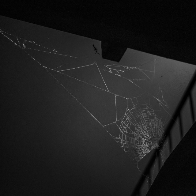 """Spider webs hang under a bridge in the mist"" stock image"