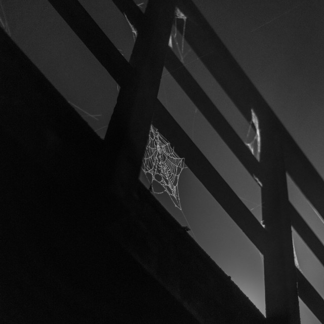 """Spiders web in the mist"" stock image"