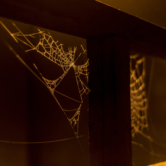 """Spider webs hang under a railing in the mist"" stock image"