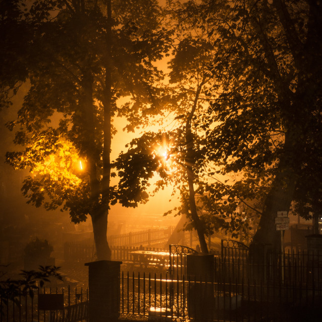 """Light streams through trees in the mist"" stock image"