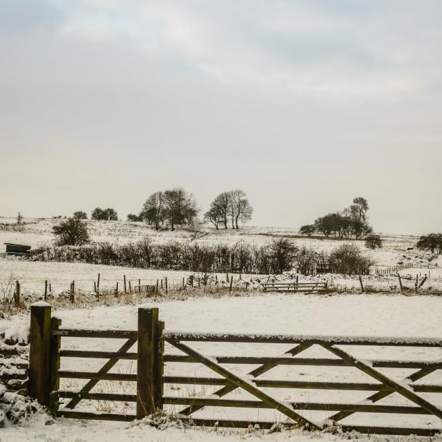 """Snowy Fields"" stock image"