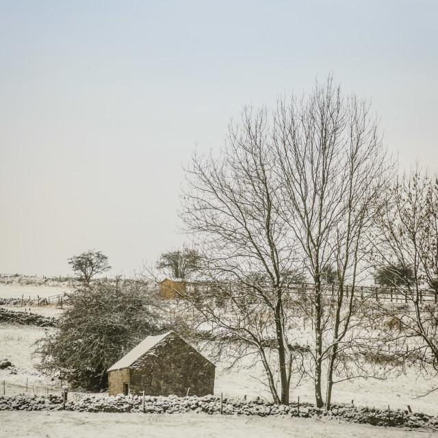 """Snowy Meadow"" stock image"