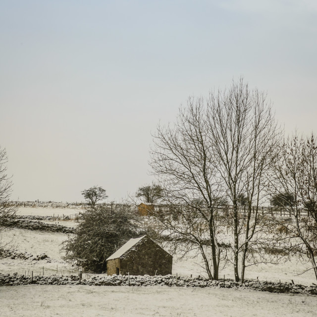 """""""Acroos the Snowy Field"""" stock image"""