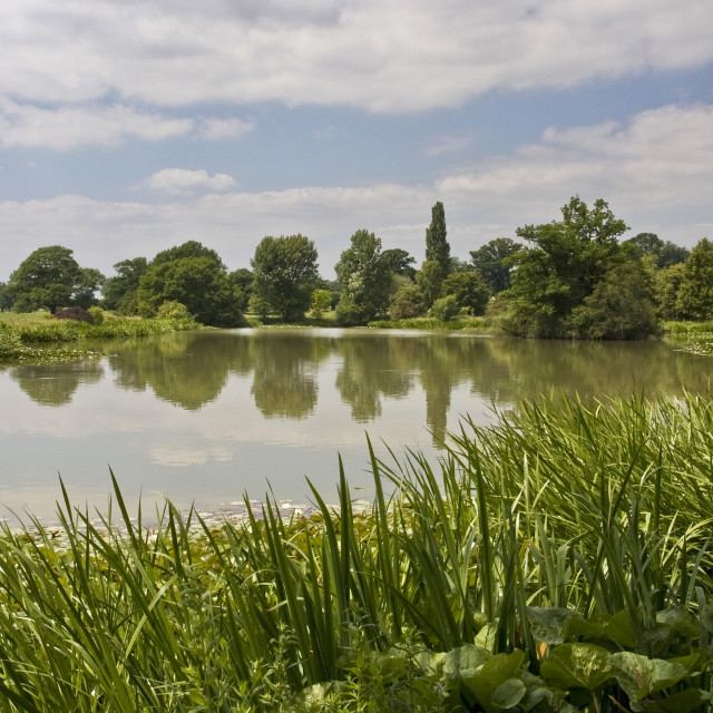 """""""Lake at Spetchley Worcestershire"""" stock image"""