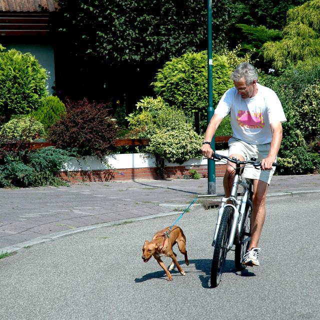 """""""Biking with dog"""" stock image"""