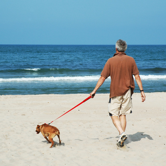 """""""walking the dog"""" stock image"""