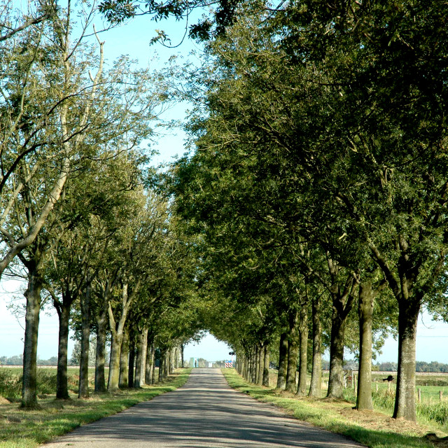 """""""Lane with trees"""" stock image"""
