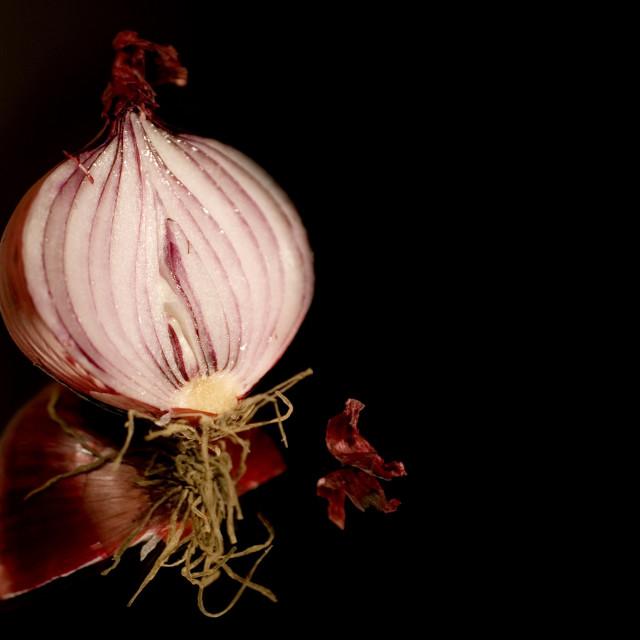 """""""sliced onion on black"""" stock image"""