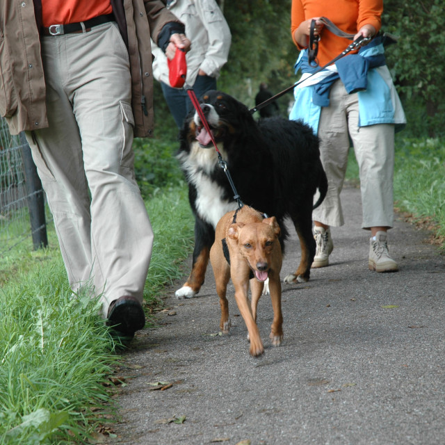 """""""People walking the dogs"""" stock image"""