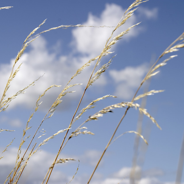 """""""grass and sky_01"""" stock image"""