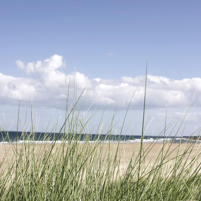 """""""grass beach sea sky_02"""" stock image"""
