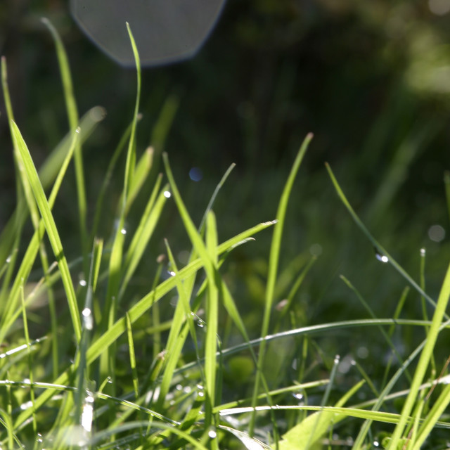 """""""Green grass with sunlight"""" stock image"""