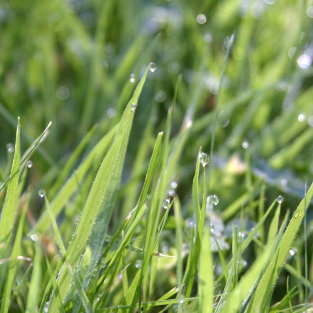 """Green Grass_07"" stock image"