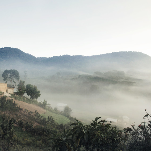 """Morning mist over Bwindi Impenetrable National Park"" stock image"