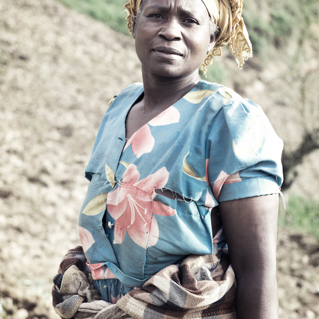 """Ugandan woman on the fields"" stock image"