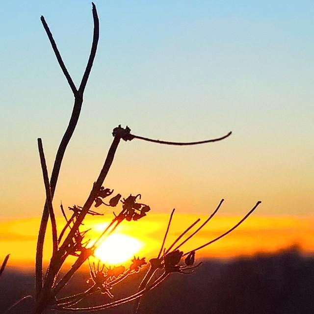 """silhouette sunset"" stock image"
