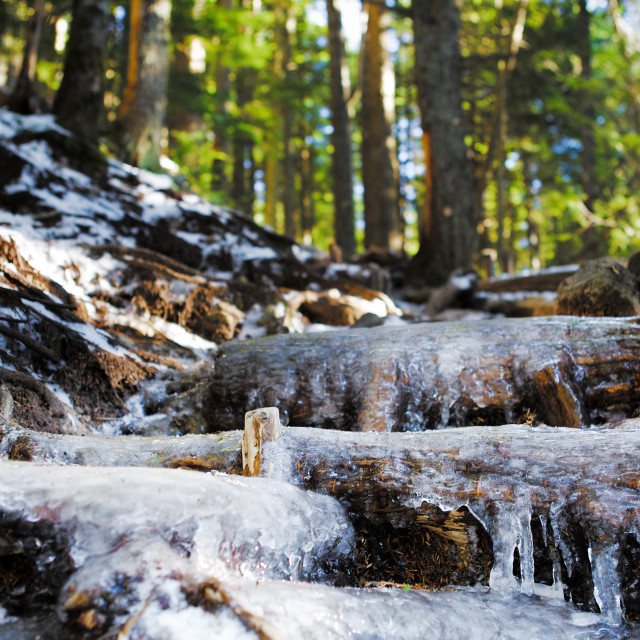 """Frozen trail in the forest"" stock image"