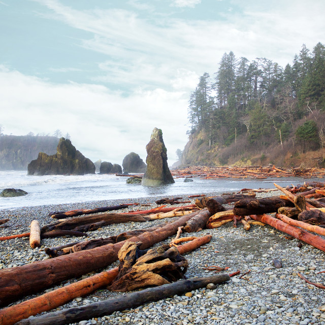 """On the beach, Olympic Peninsula"" stock image"
