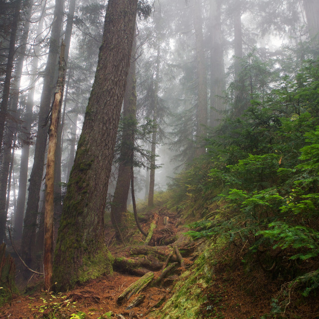 """Trail around Mount Seymour."" stock image"