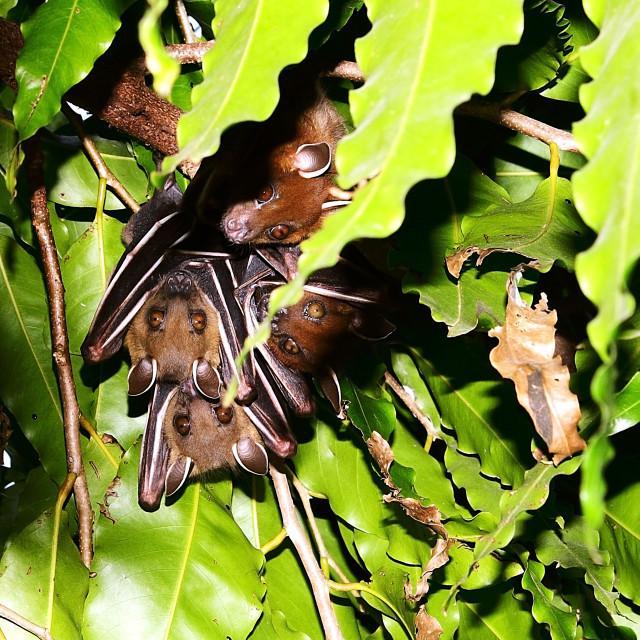 """Bat Family"" stock image"