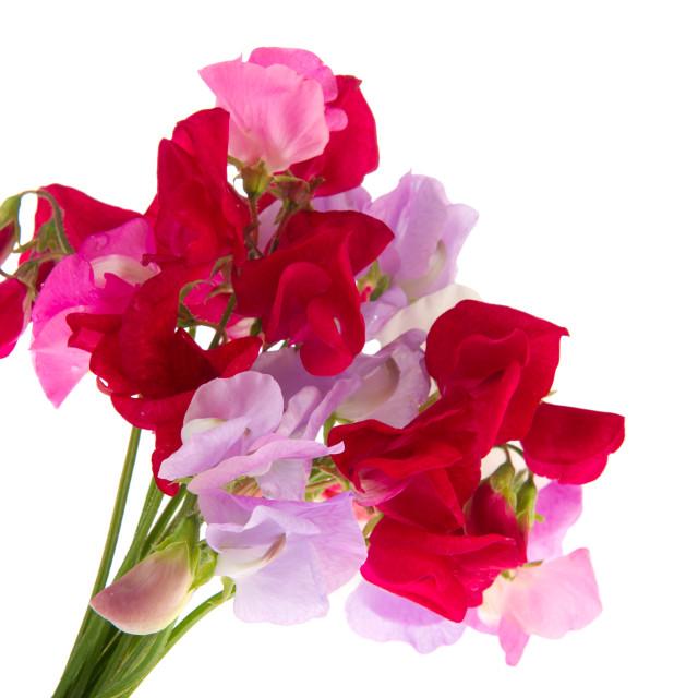 """Bouquet Lathyrus"" stock image"