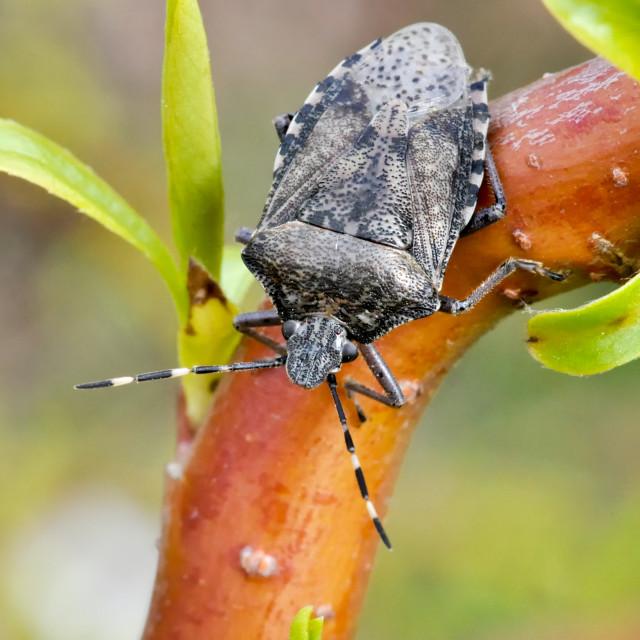 """""""Grey Garden Bug"""" stock image"""