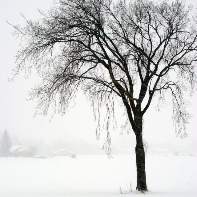 """""""Hiver long"""" stock image"""