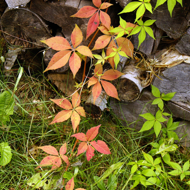 """""""Approche d'automne"""" stock image"""