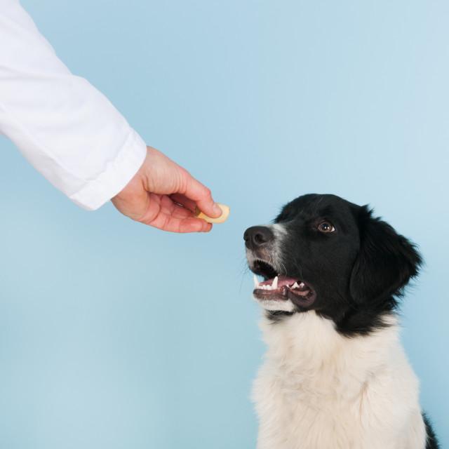 """Reward from the veterinarian"" stock image"