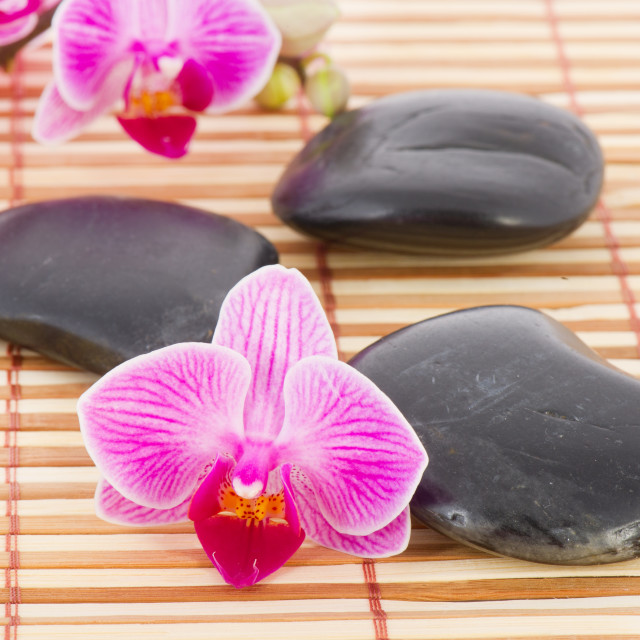 """""""Tropical pink orchid in wellness setting"""" stock image"""