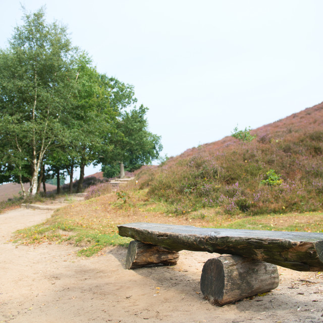 """Empty wooden bench in heather in landscape"" stock image"
