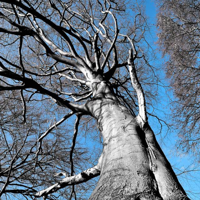 """Tree in winter"" stock image"