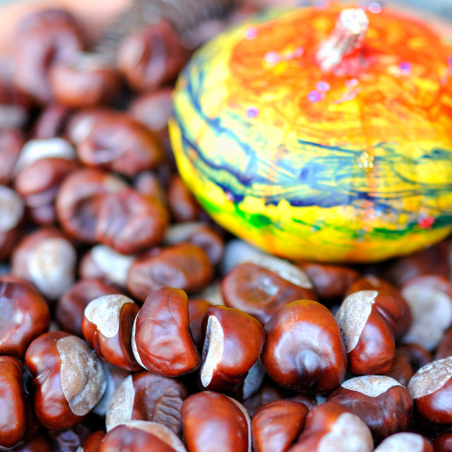 """""""Chestnuts and pumpkin"""" stock image"""