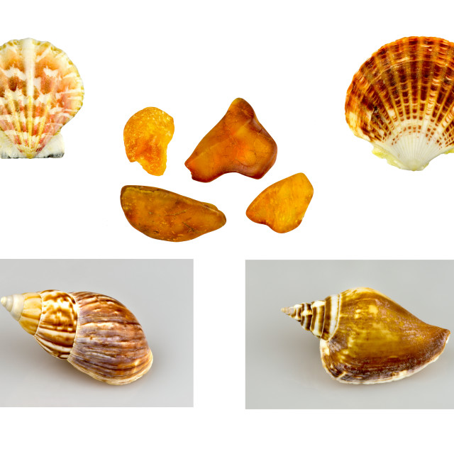 """""""shells, snails and amber"""" stock image"""
