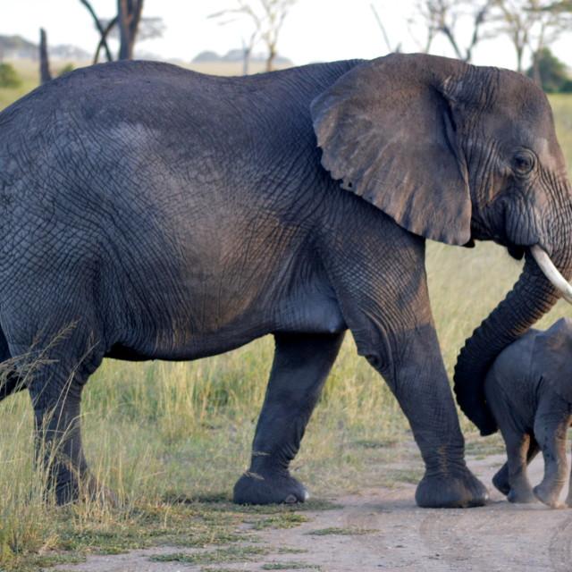 """Elephant and baby"" stock image"