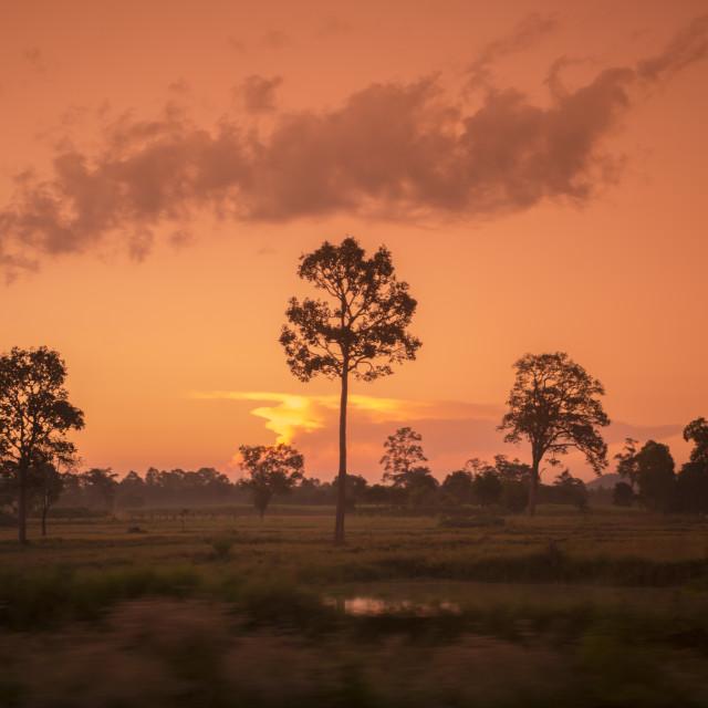 """THAILAND ISAN SURIN LANDSCAPE MORNING"" stock image"