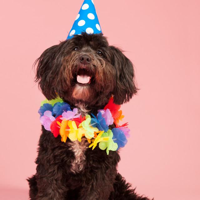 """Birthday dog"" stock image"