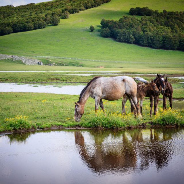 """""""Wild Horses #2"""" stock image"""