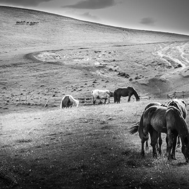 """""""Wild Horses #3"""" stock image"""