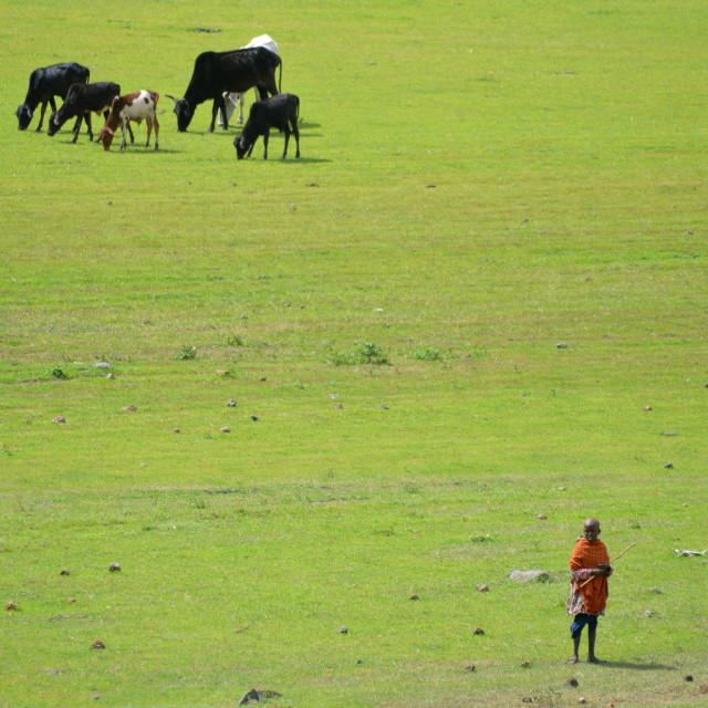 """Masai cowherd"" stock image"