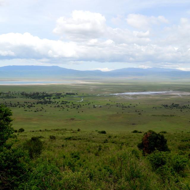 """""""The Ngorongoro Crater"""" stock image"""