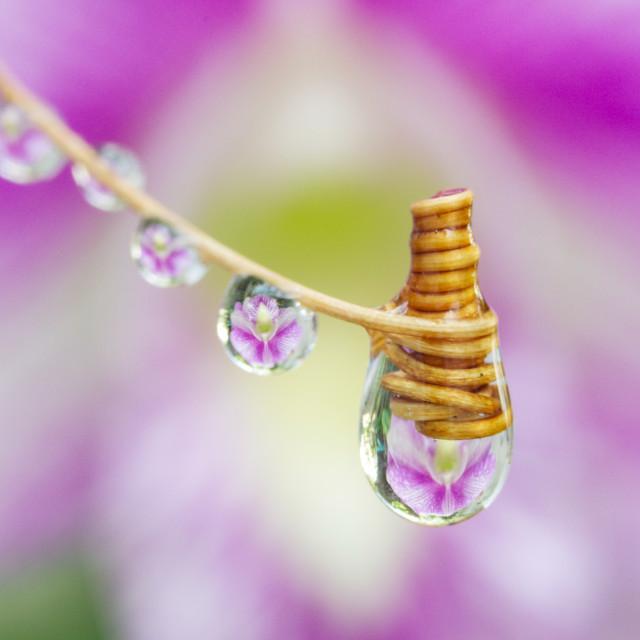 """Nice purple bubbles"" stock image"